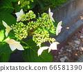 녹색 식물 2 66581390