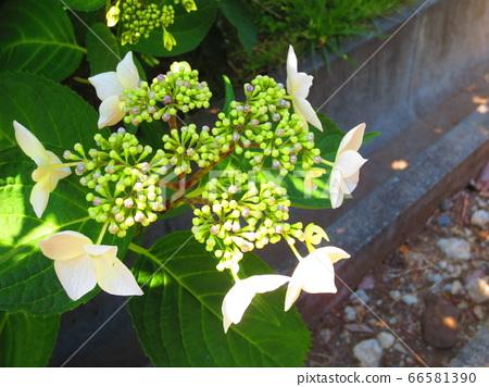 Green plant 2 66581390