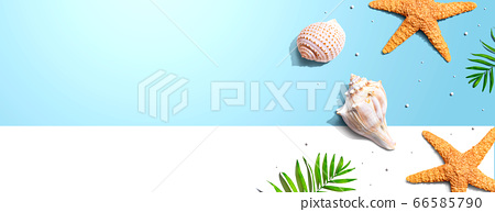 Summer concept with starfish and seashells 66585790
