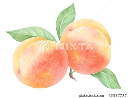 兩個桃子和樹葉水彩 66587787