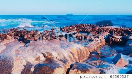 도이커 섬 물개서식지 66599587