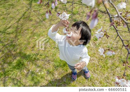 벚꽃이 피는 공원에서 노는 소년 66600581