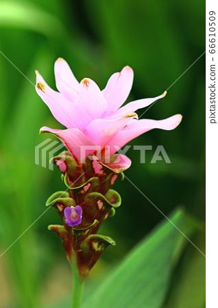 꽃 66610509