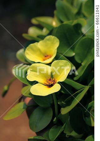 꽃 66611041