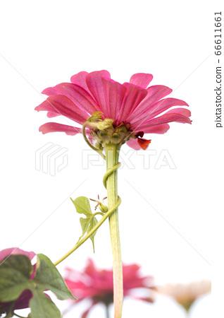꽃 66611661