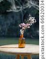 vase 66620034