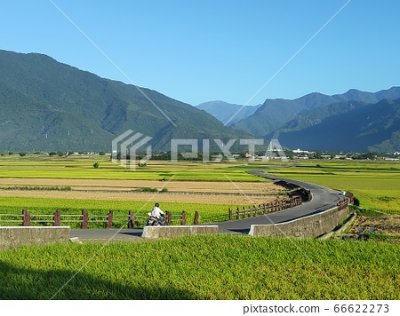 Aerial view of Beautiful Rice Fields in taitung . 66622273