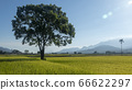 Aerial view of Beautiful Rice Fields in taitung . 66622297