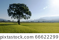 Aerial view of Beautiful Rice Fields in taitung . 66622299