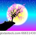 Cherry Blossom under Moonlight 66631430