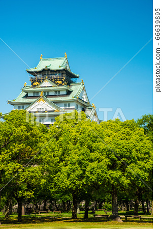 오사카와 신록 66639895