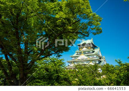 오사카와 신록 66641553