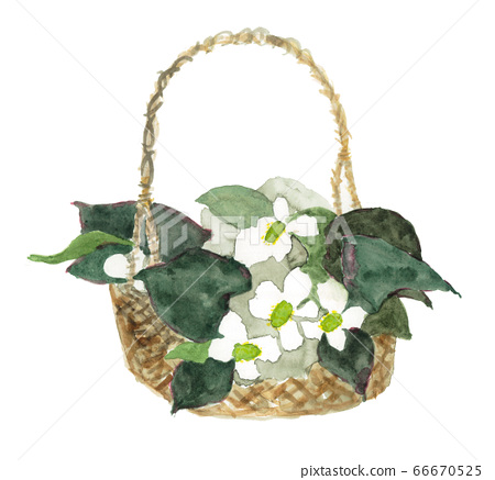 Watercolor illustration of a basket of dodoma flowers 66670525