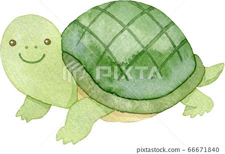 微笑的烏龜 66671840