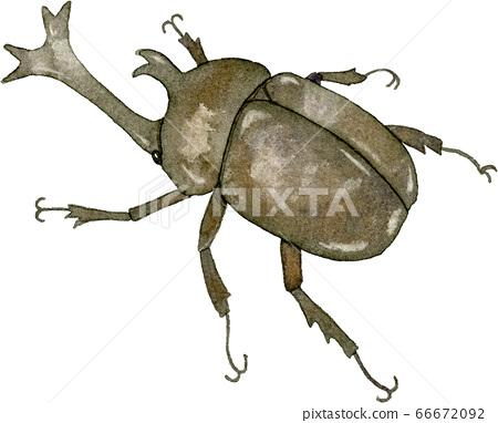 Beetle 66672092