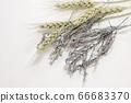 小麥和薰衣草乾花 66683370