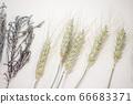 보리와 라벤더 말린 꽃 66683371