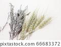 小麥和薰衣草乾花 66683372