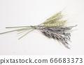 小麥和薰衣草乾花 66683373