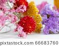 다채로운 말린 꽃 66683760