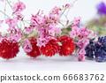 다채로운 말린 꽃 66683762