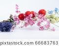 다채로운 말린 꽃 66683763