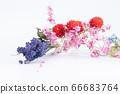 다채로운 말린 꽃 66683764