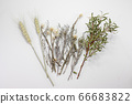 小麥和薰衣草乾花 66683822
