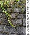 벽 블록과 잡초 66694262