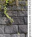 벽 블록과 잡초 66694263
