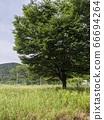 초원과 큰 나무 66694264
