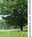 초원과 큰 나무 66694266