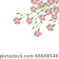 Kawarana Desiko水彩 66698546