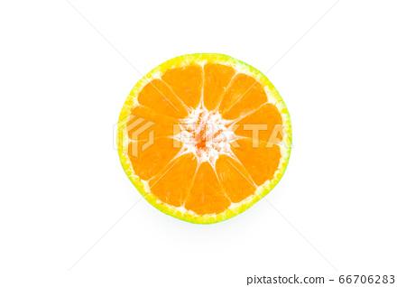 Shogun oranges fruit on a white background 66706283