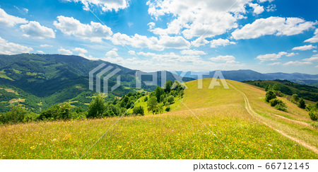 path through the meadow in mountains. sunny summer 66712145
