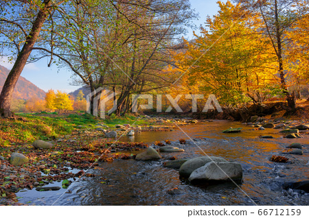 river in the forest. water stream among the 66712159