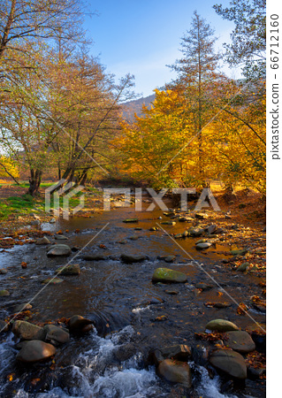 river in the forest. water stream among the 66712160