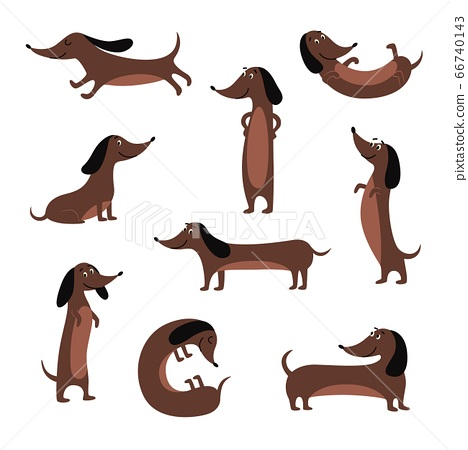 Cute dachshund dog isolated set - cartoon pet sitting, standing and lying 66740143