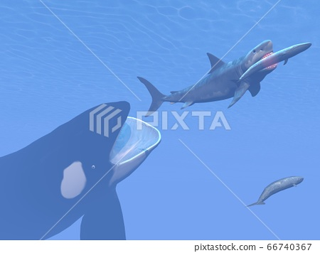 Orca, megalodon shark and whale - 3D render 66740367