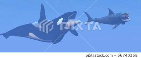 Orca, megalodon shark and whale - 3D render 66740368