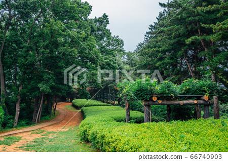 Deokpojin fort green forest road in Gimpo, Korea 66740903