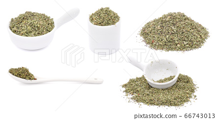 Oregano herb 66743013