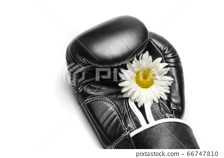 boxing glove with a large chamomile flower closeup 66747810