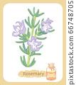 迷迭香和精油瓶的插圖素材 66748705