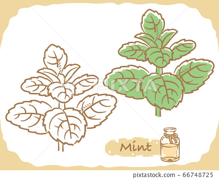 Mint and essential oil bottle illustration material 66748725