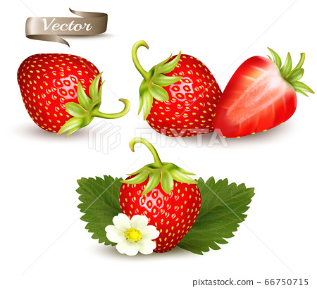 Set of strawbery. Realistic 3d isolated vector 66750715