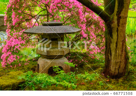 Japanese garden, Park Clingendael, The Hague, Netherlands 66771508