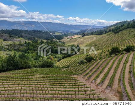 Aerial view of Napa Valley vineyard landscape  66771940