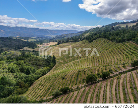Aerial view of Napa Valley vineyard landscape  66772024