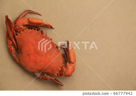 Big steamed crabs on natural brown background with 66777942